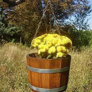 Blumenampel aus Holz, rund, mit Kette, 17x25cm | www.pflanzenkuebel.eu